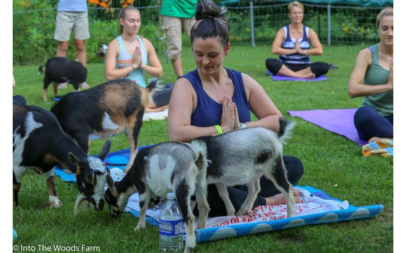 Goat Yoga In The Woods For Everyone (6)