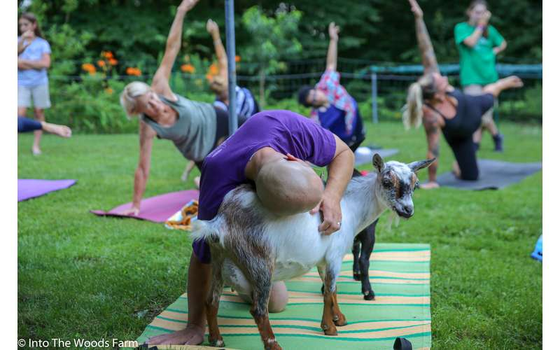 Goat Yoga In The Woods For Everyone (7)