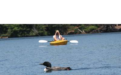 Photo of loon