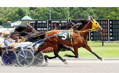 Live Harness Racing Photo