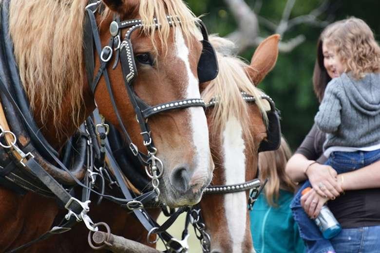 Horse Photo