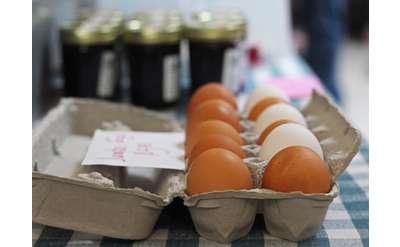 Carton of Eggs Photo