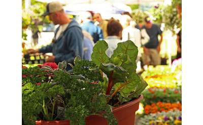Farmers' Market Photo
