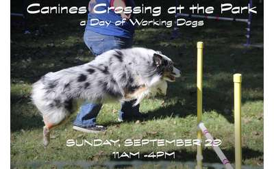 Canines Crossing at the Park Banner