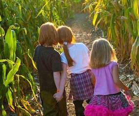 three kids in corn maze