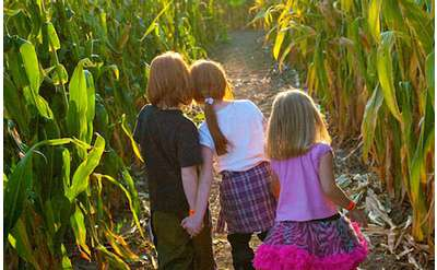 three kids in corn maze
