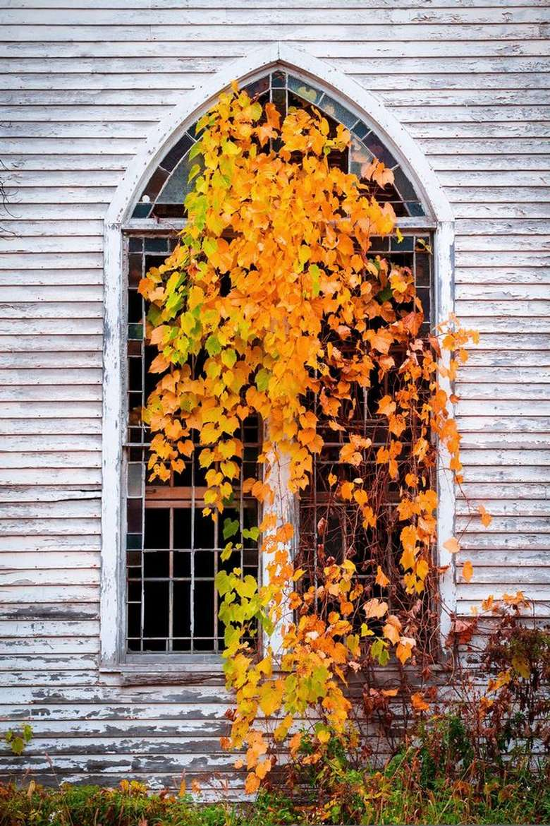 painting of a tree with orange leaves by an old house