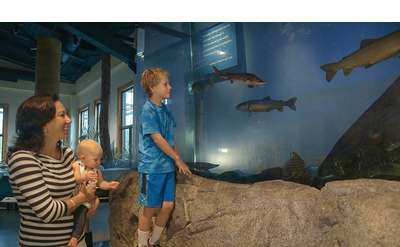 woman, boy, and baby checking out fish exhibit