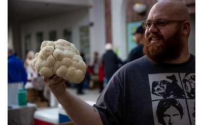 Mariaville Mushroom Men, photo by Pattie Garrett