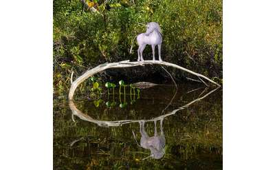 unicorn standing on a log
