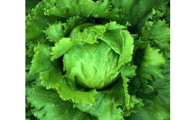 Lettuce at the Market