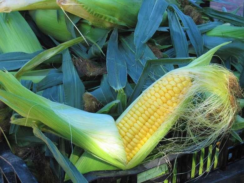 Corn at the Market