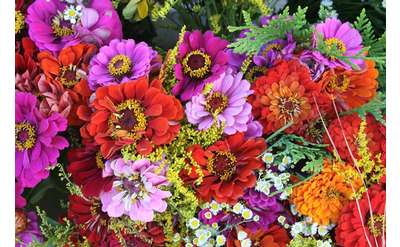 Summer flowers at the Market