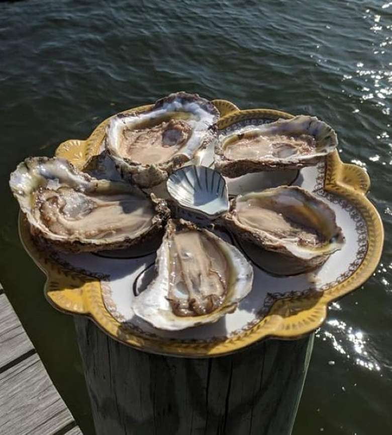 Oysters at the Market