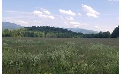large field with mountains in the background
