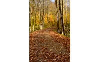 Adirondack trail fall scenery photograph by Sue Kiesel