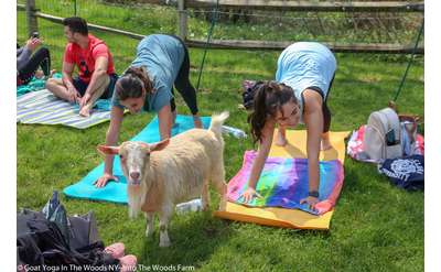 Into The Woods Farm Goat Yoga