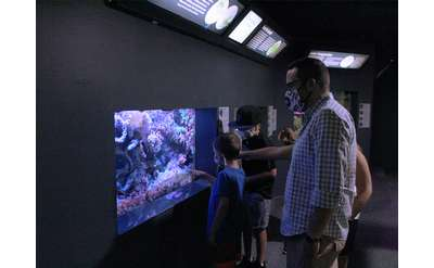 A family wearing face coverings views the coral reef tank in the museum's Aquarium.