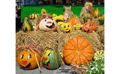 a pumpkins display