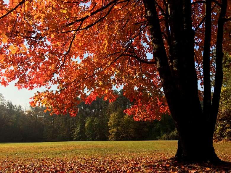 A maple at Spa Park by Allison Schweizer.