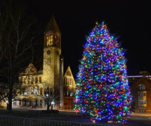 huge lit tree with colored lights in Albany