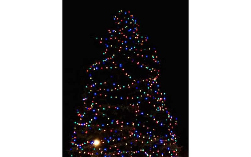 tree-lighting-display2 City of Albany Tree Lighting on Dec 5 th - 5 -7 PM on steps of Albany City Hall !! [your]NEWS