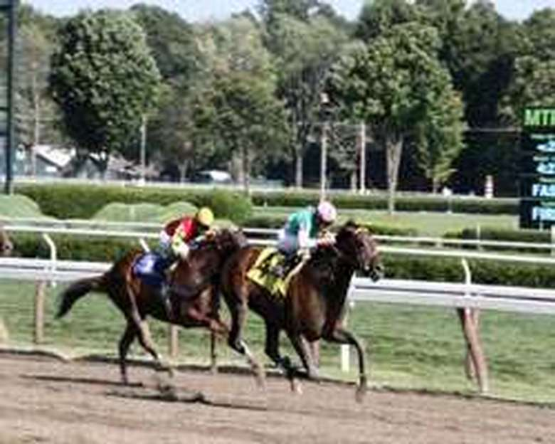 horses racing down the track at saratoga race course