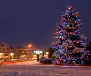 a huge outdoor tree decorated in colored lights and covered in snow