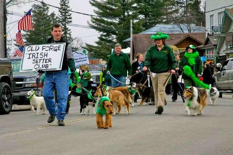 parade of Irish setter club