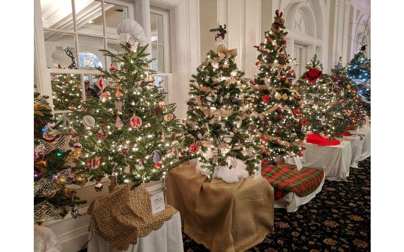 lineup of Christmas trees