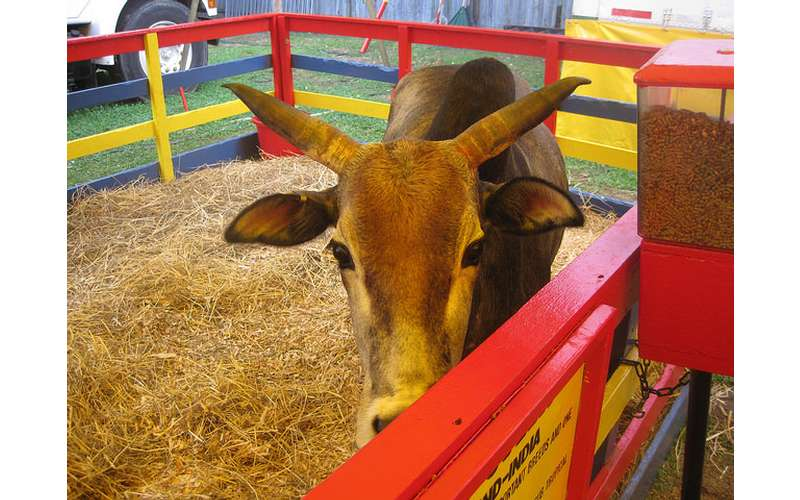 178th Saratoga County Fair - Tuesday, Jul 23, 2019 until