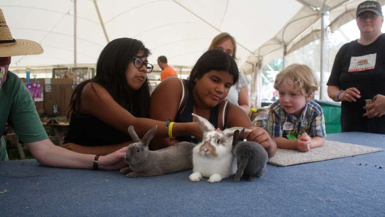 kids petting a bunny