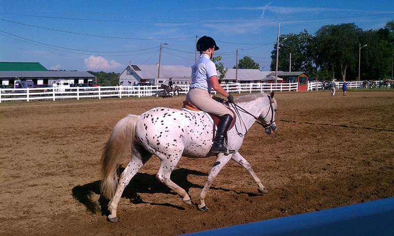 person riding a white horse with black spots