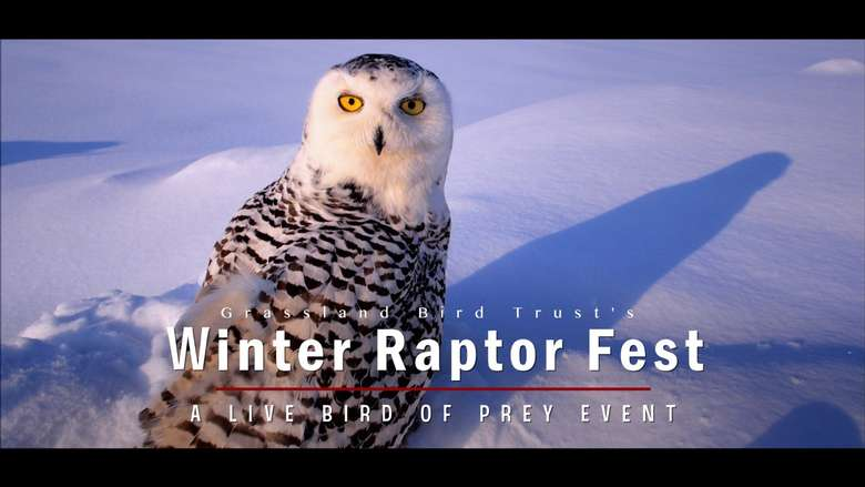 virtual winter raptor fest promo