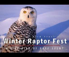 virtual winter raptor fest promo