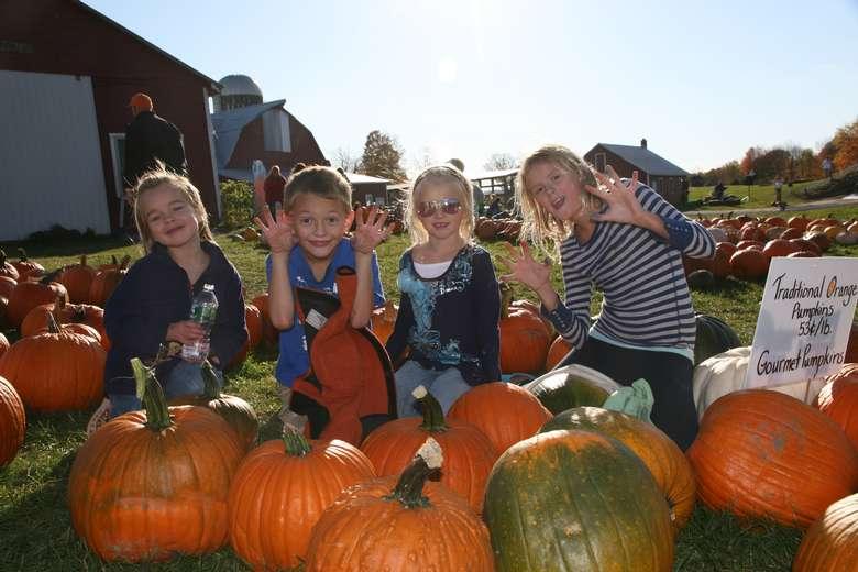 Kids in a pumpkin patch