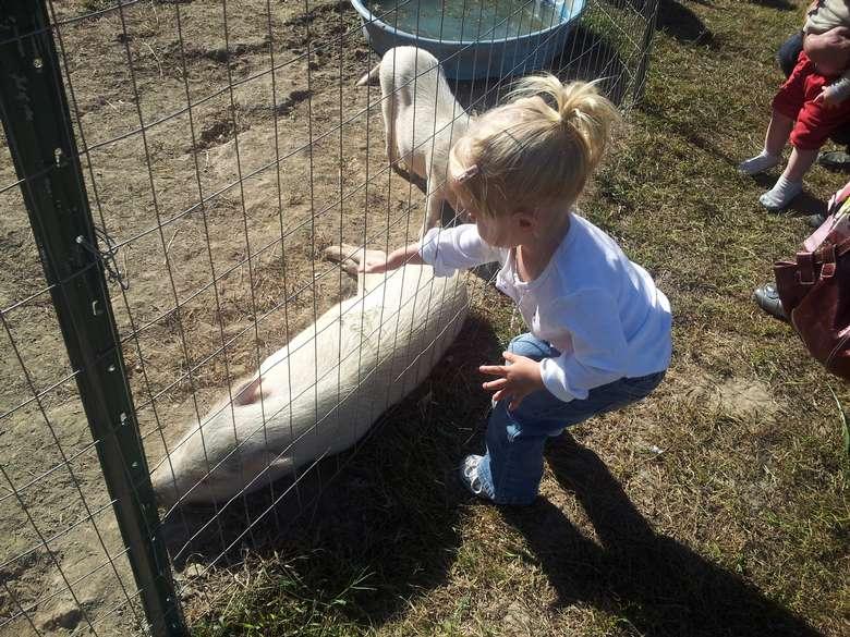 Little blonde girl pets a pig at Clifton Park Farm Fest