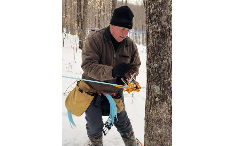 man getting sap from tree