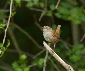 small bird on twig