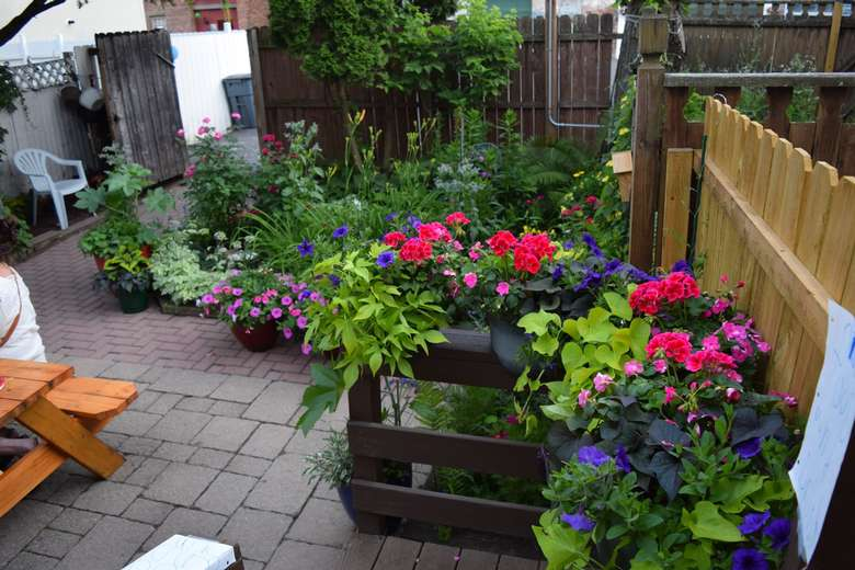 plants and flowers in yard