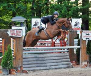 horse jumping over an obstacle at the show