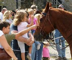 group near a horse