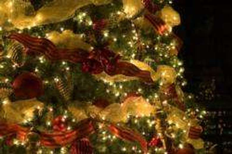 close up of Christmas tree