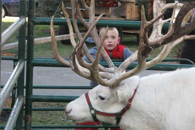 Reindeer can be seen at the Christmas in Warrensburgh celebration