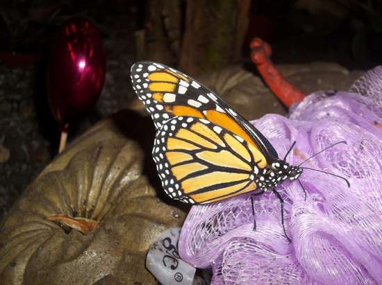 Butterflies Amp Blooms At Misci Tuesday Apr 9 2019 Until