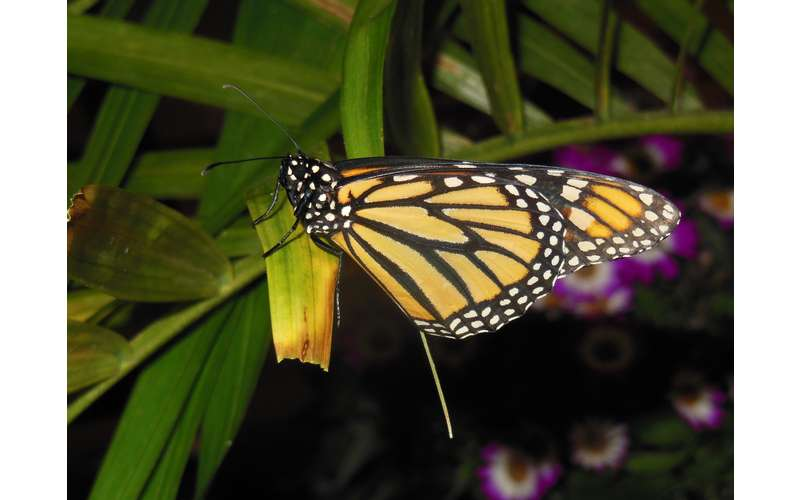 a monarch butterfly on a green plant