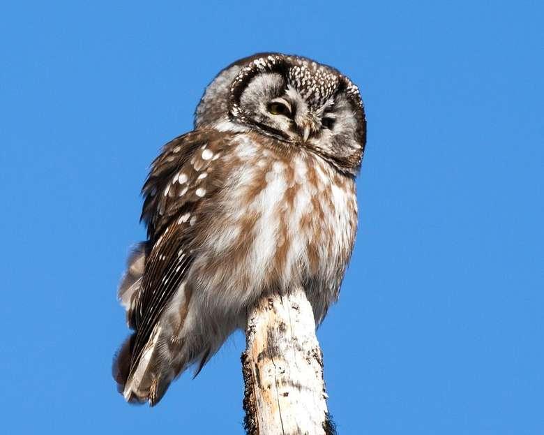 owl on post