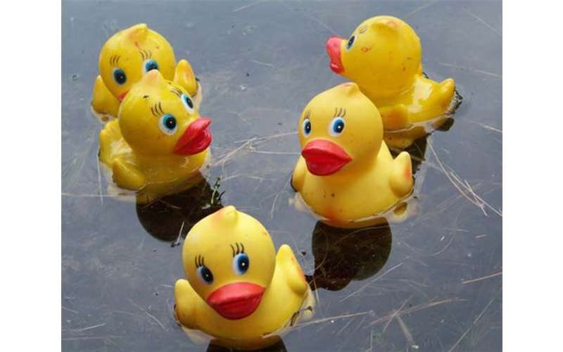 five yellow rubber ducks on the water