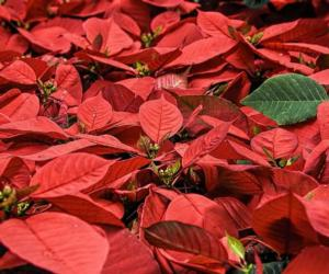 Annual Holiday Greens Show