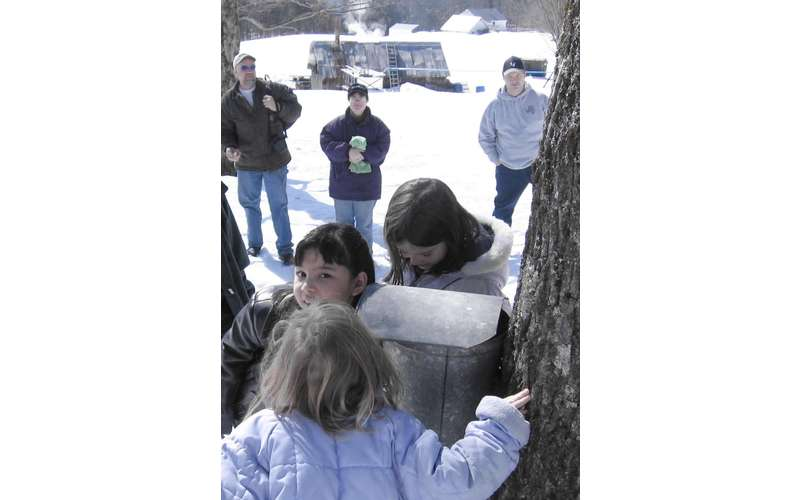kids looking at a maple tree sap bucket